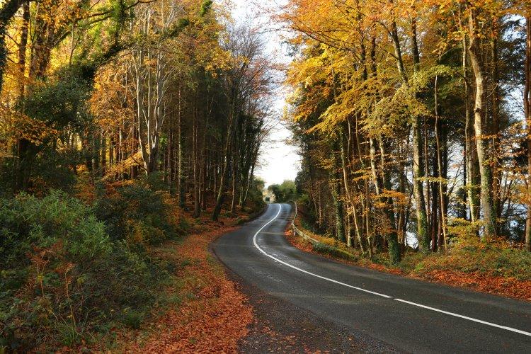 Autumn vibes in near Lough Gill