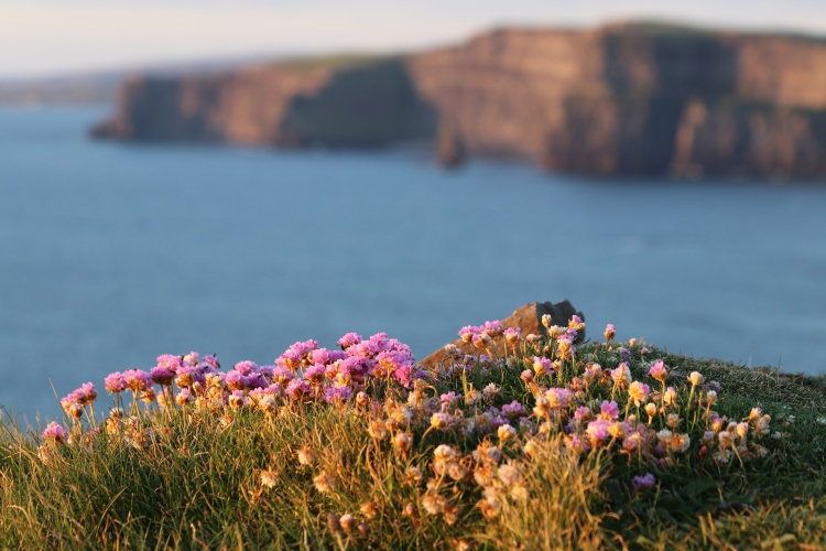 Incentives To Bring Irish Expats / Migrants Home - CareerWise